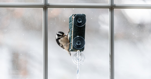 Convert your conservatory to get the most out of bird watching 2