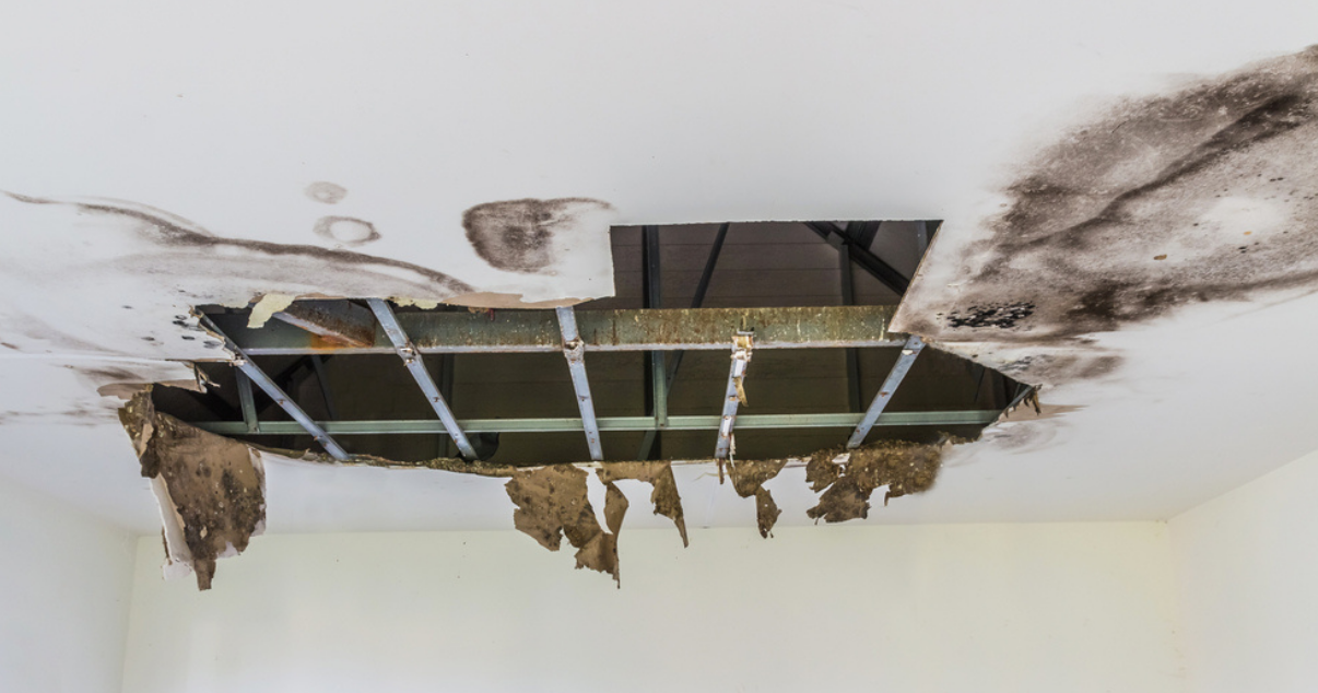 mold in a roof before a conservatory roof conversion